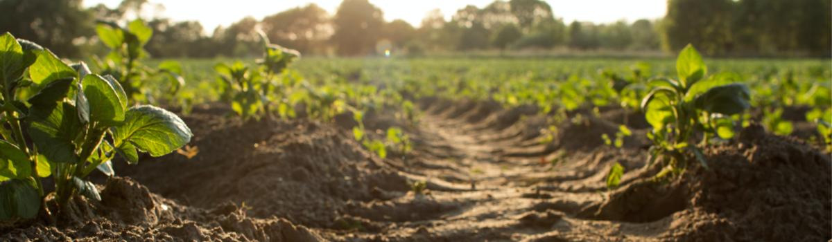 Challenge 4 – How can we mitigate climate change through soil carbon management?